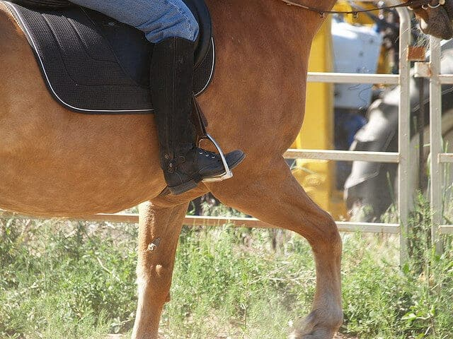 3 Ways to Stop a Horse from Bucking  wikiHow