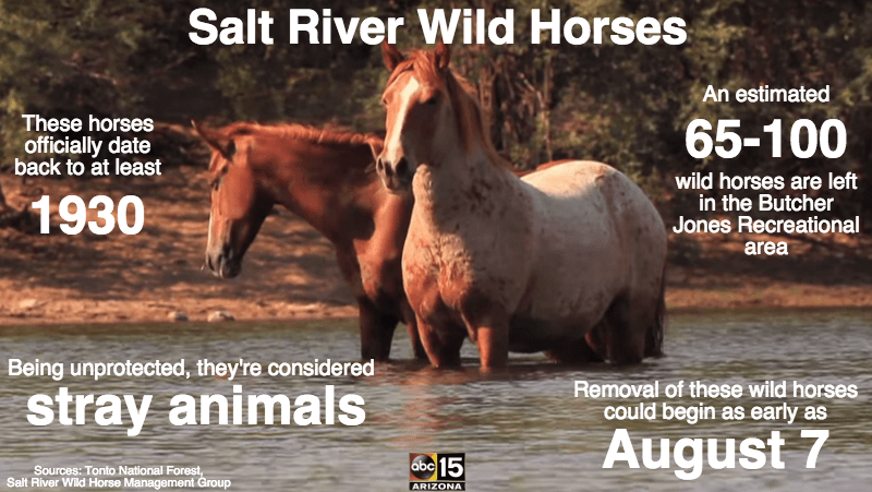 Image source: American Wild Horse Preservation Campaign / Facebook