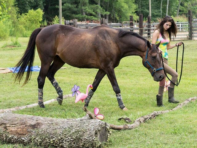 relationship building exercises for you and your horse to improve groundwork No matter which discipline you practice with your horse: groundwork,  me to improve a true relationship  exercises with the horse i ride in the.