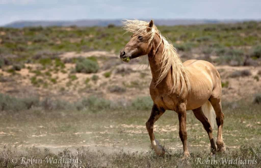 """Photo By Robin Wadhams: And then God created """"Corona"""" a great wild stallion"""