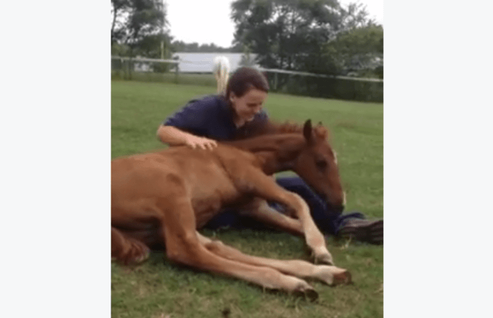 This Colt Thinks He's A Lap Dog