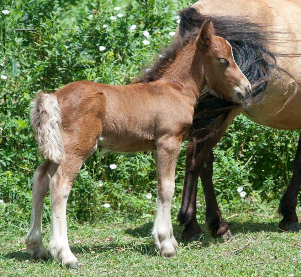 Bellbotoom July Sparkler (Sparky) as a foal. Image source: Melanie Block