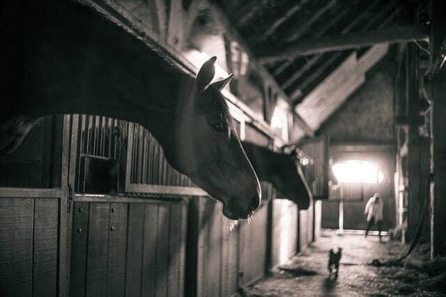 hu1 horses-786239_640