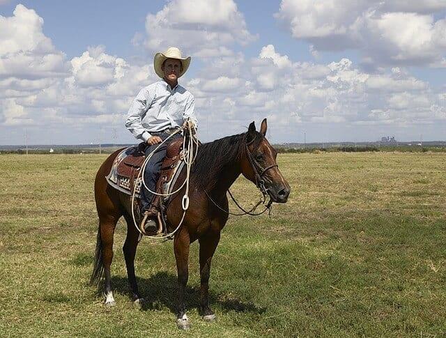qh3 cowboy-746982_640