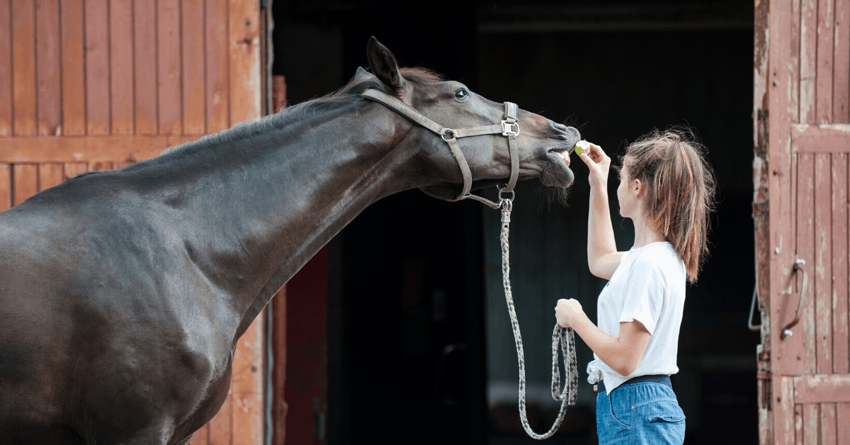 7 Everyday Items That Make Great Horse Treats