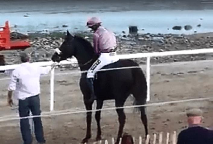 horselandign1