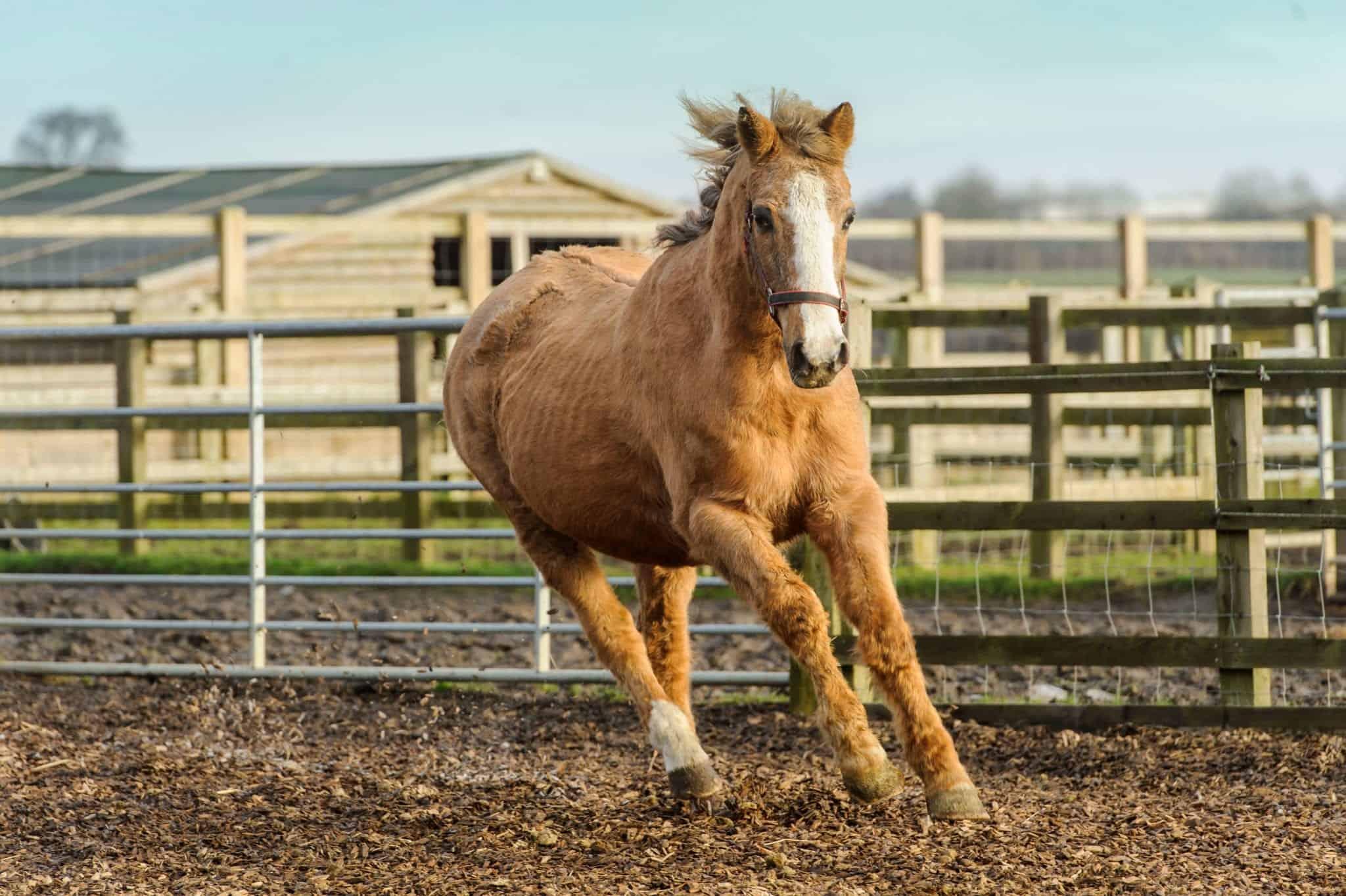 7 Horses That Lived Remarkably Long Lives Ihearthorses Com
