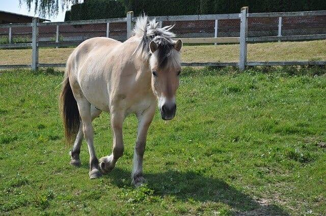 f3 horse-1010813_640