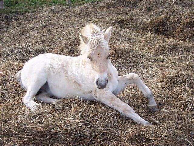 f4 horse-97335_640