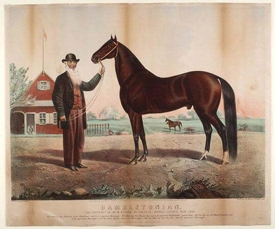 Depiction of Hambeltonian 10,  who sired Black Allan, the foundation stallion for the TWH. Image source: Eno, Henry C. - National Museum of Natural History wikimedia