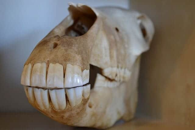 hf4 skull-646628_640