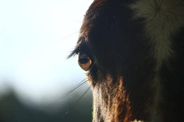 hf7 horse-1006964_640