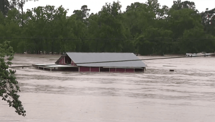 Breaking News Nearly 100 Horses Rescued From Texas