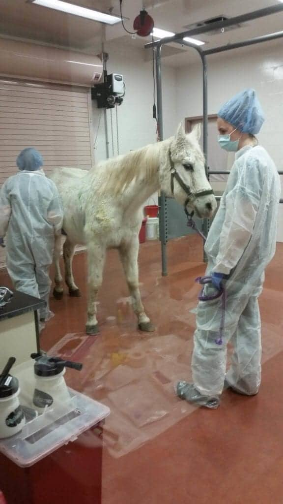 Image source: Omega Horse Rescue