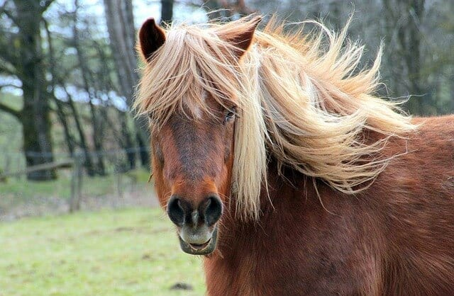 hh6 horse-1261609_640