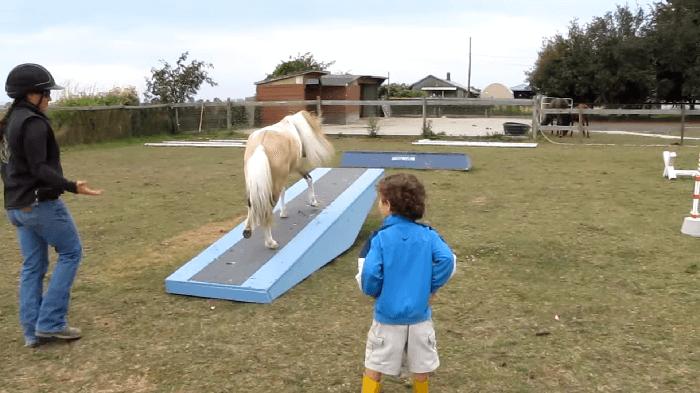 horseagility1