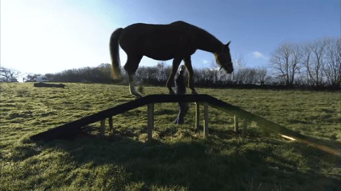 horseagility2