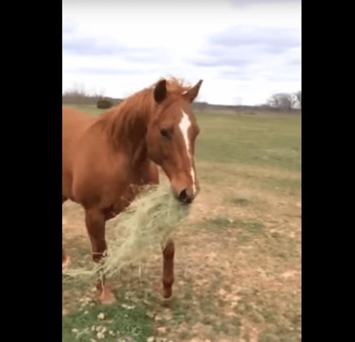 horseshareshay