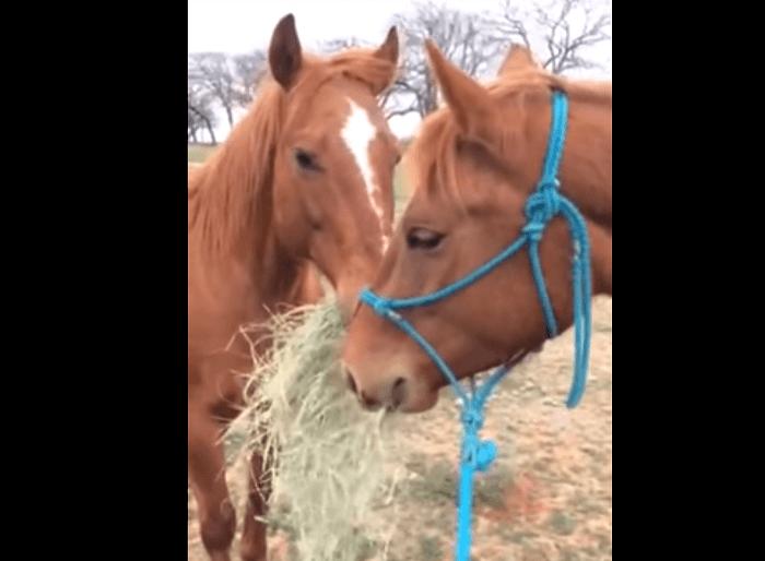 horseshareshay1