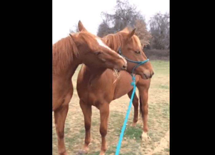 horseshareshay2