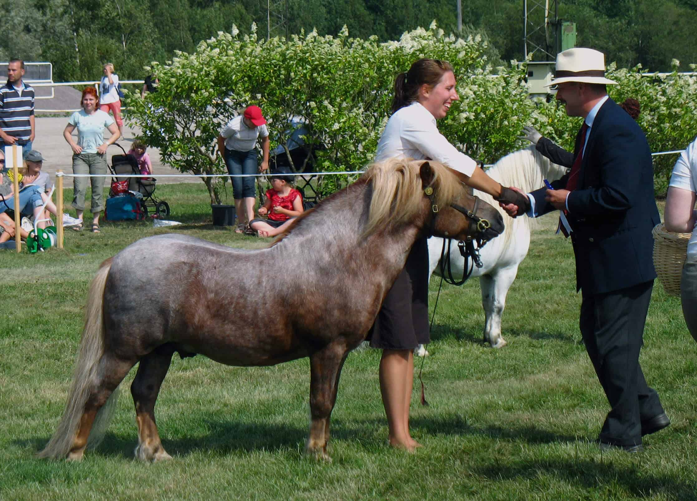9 Things You Didn't Know About The Shetland Pony