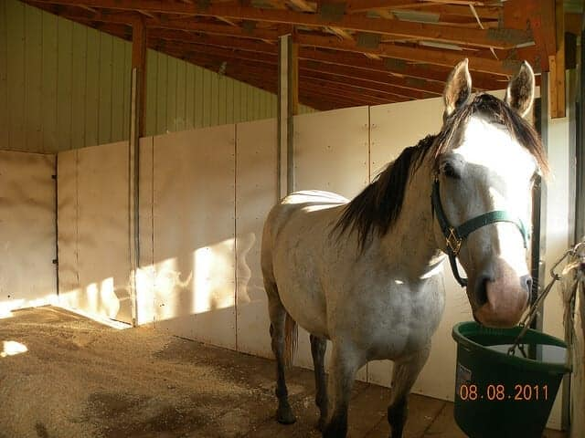 5 Ways To Make Cleaning Your Horse's Stall Easier