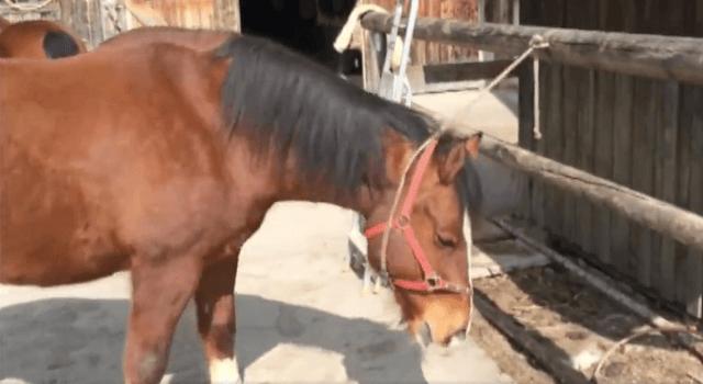 horsehoudini1