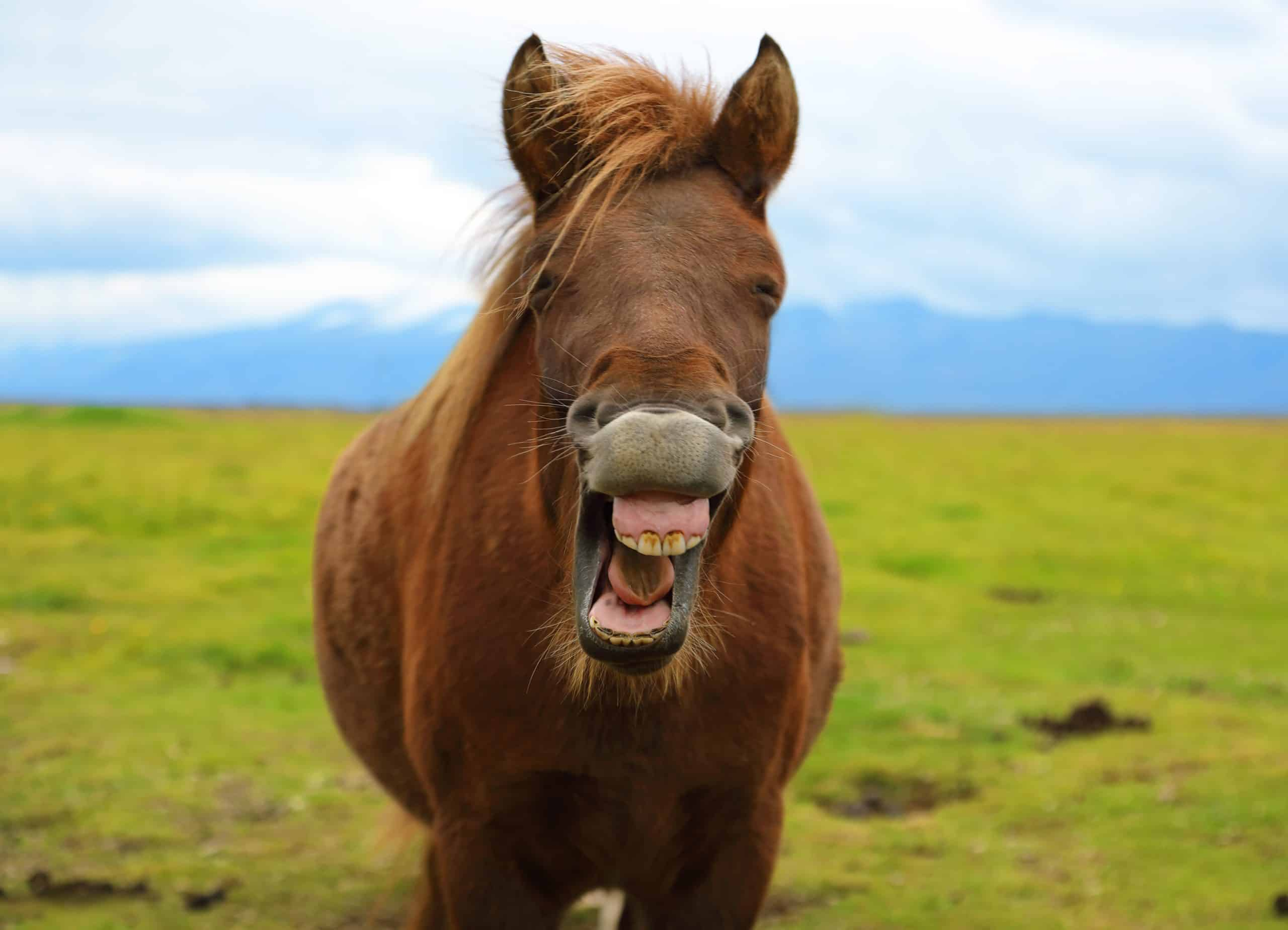 7 Important Things You Should Know About Horse Teeth
