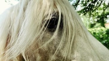 Learn To Style Your Horses Mane With These 6 Popular Designs