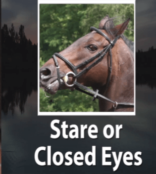 Study Helps Horse Owners Recognize The Facial Expressions Of Pain