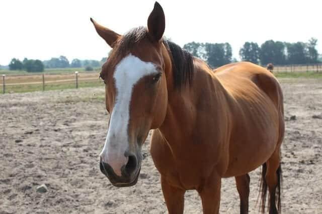 Understanding Your Horse's Body Language – iHeartHorses.com June 2017 Clipart