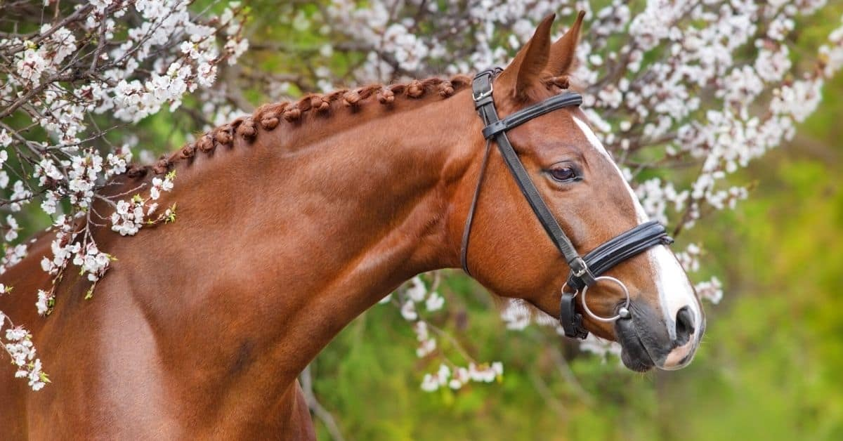6 Popular Horse Mane Styles You Can Do Yourself