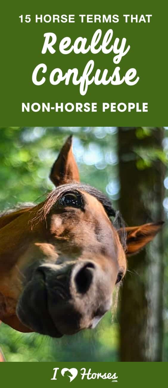 horse terms