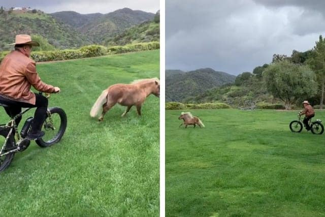Arnold Schwarzenegger Posts Hilarious Video With His Beloved Mini Horse