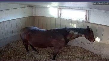 PA Foal Watch