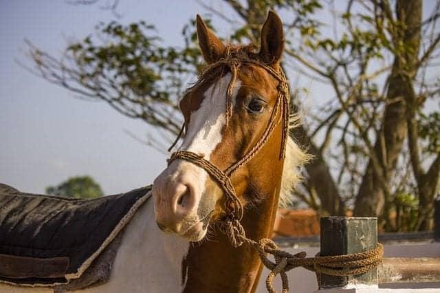 nutrient deficiency in horses