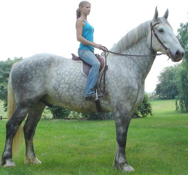 15 Breathtaking Images Of Draft Horses