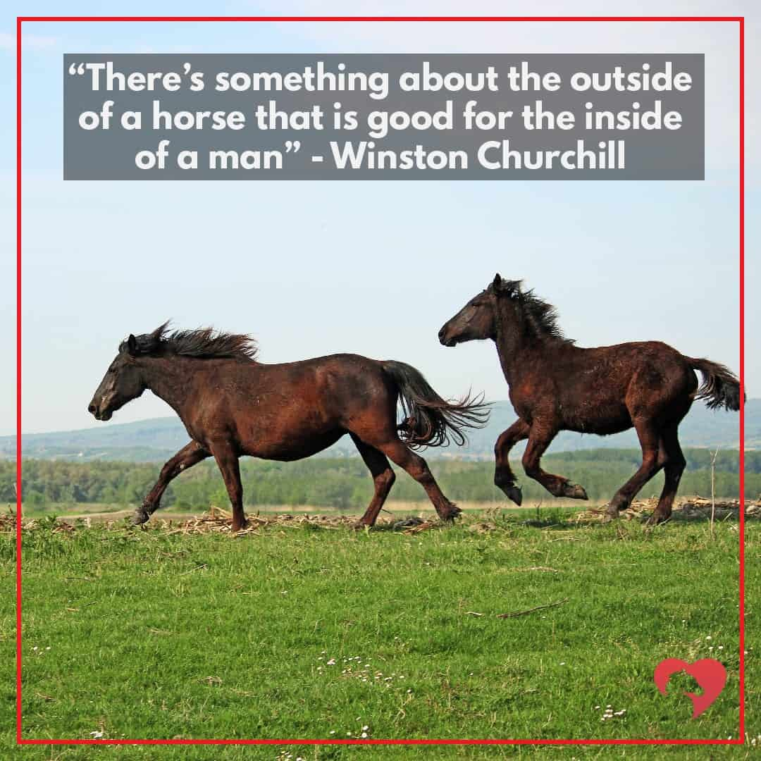 15 Greatest Quotes About Horses Of All Time