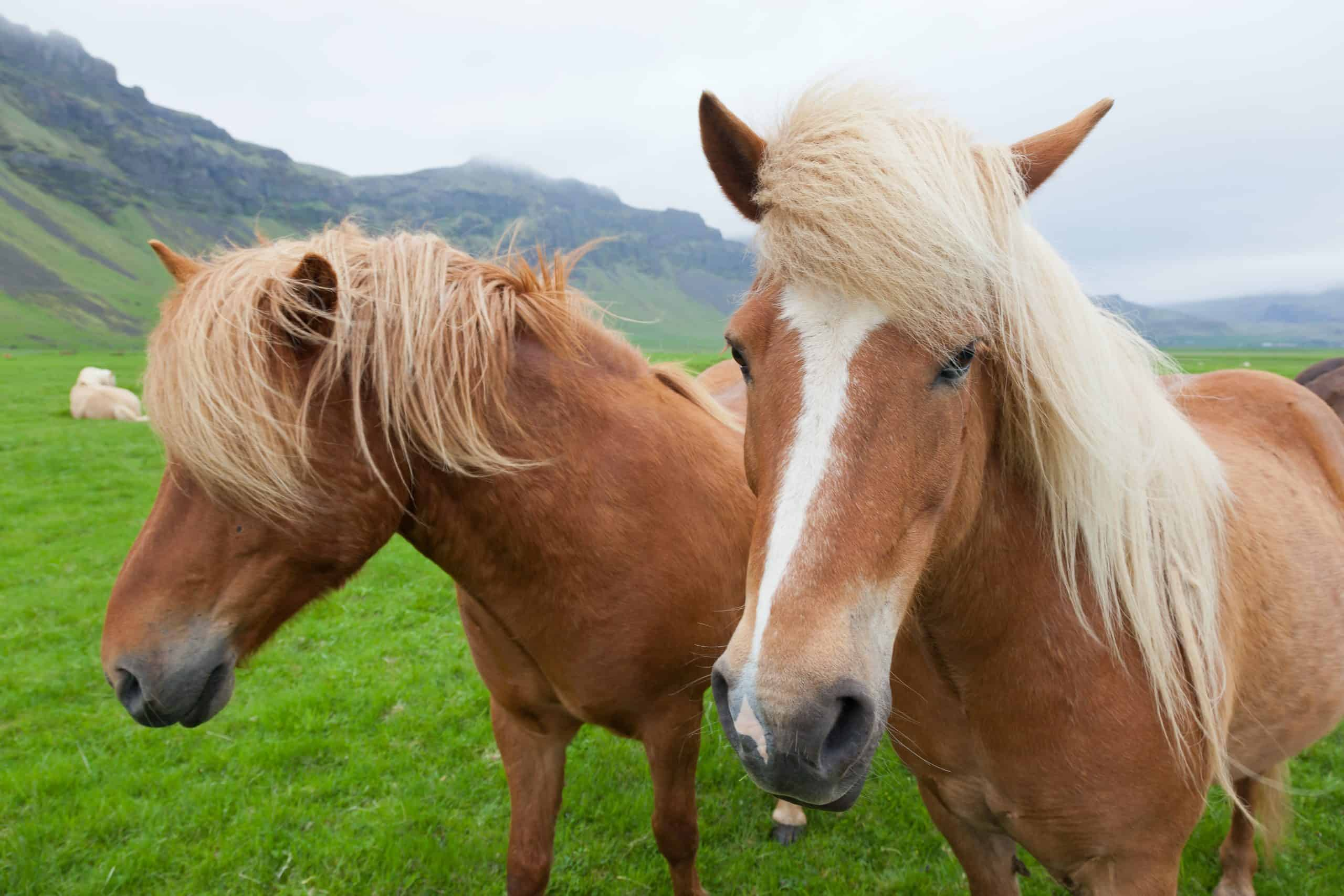 5 Of The Oldest Horse Breeds In The World