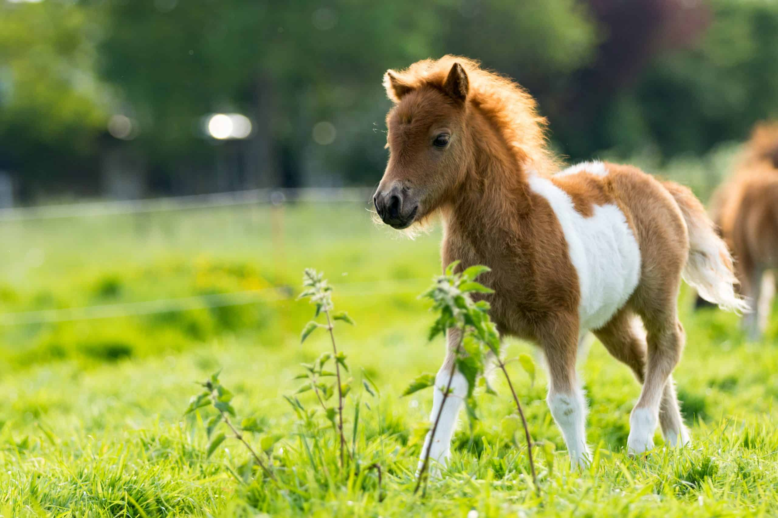 20 Adorable Pictures Of Foals You Ll Love
