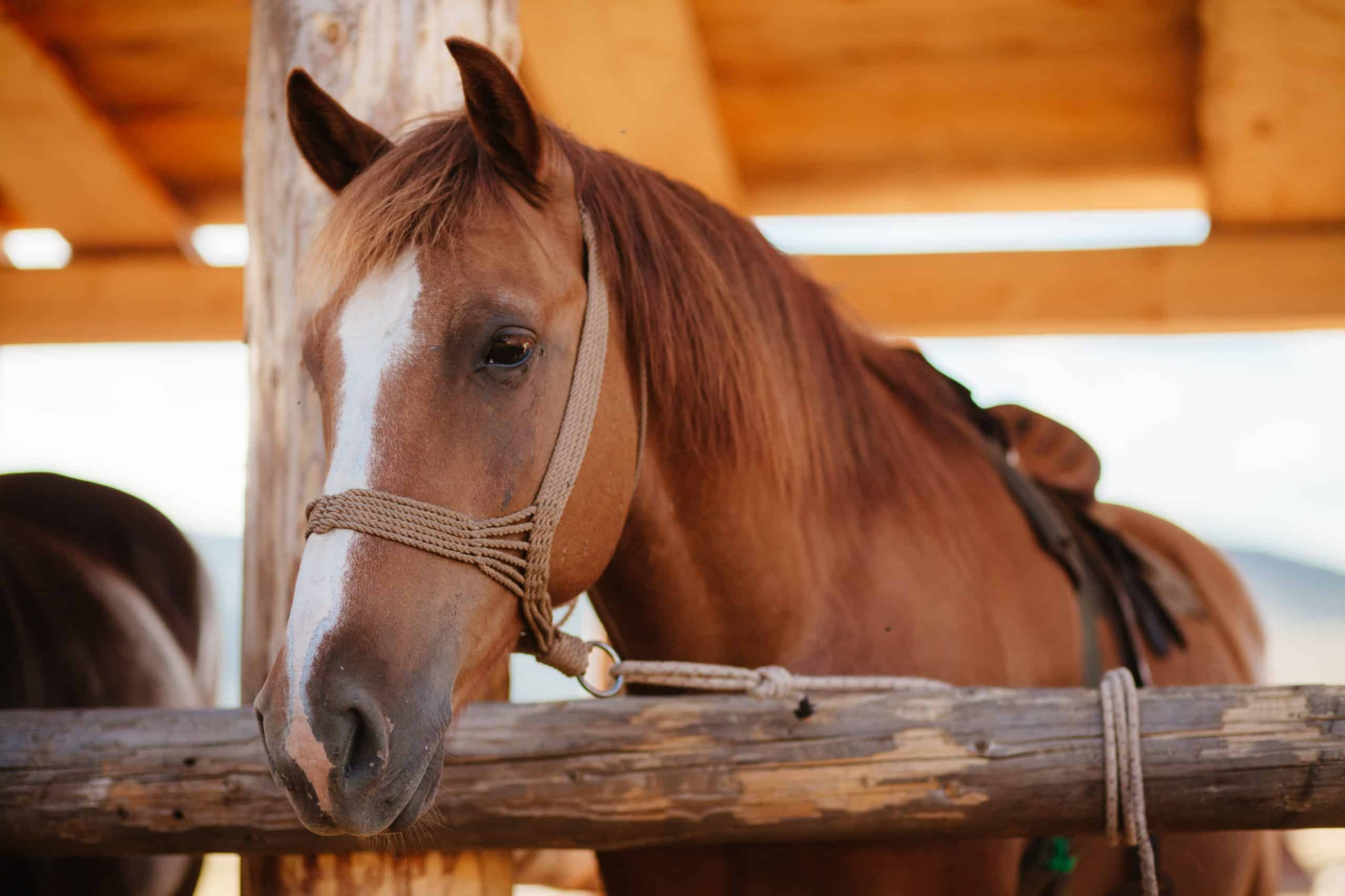 6 Diy Ways To Prevent Stall Boredom For Horses