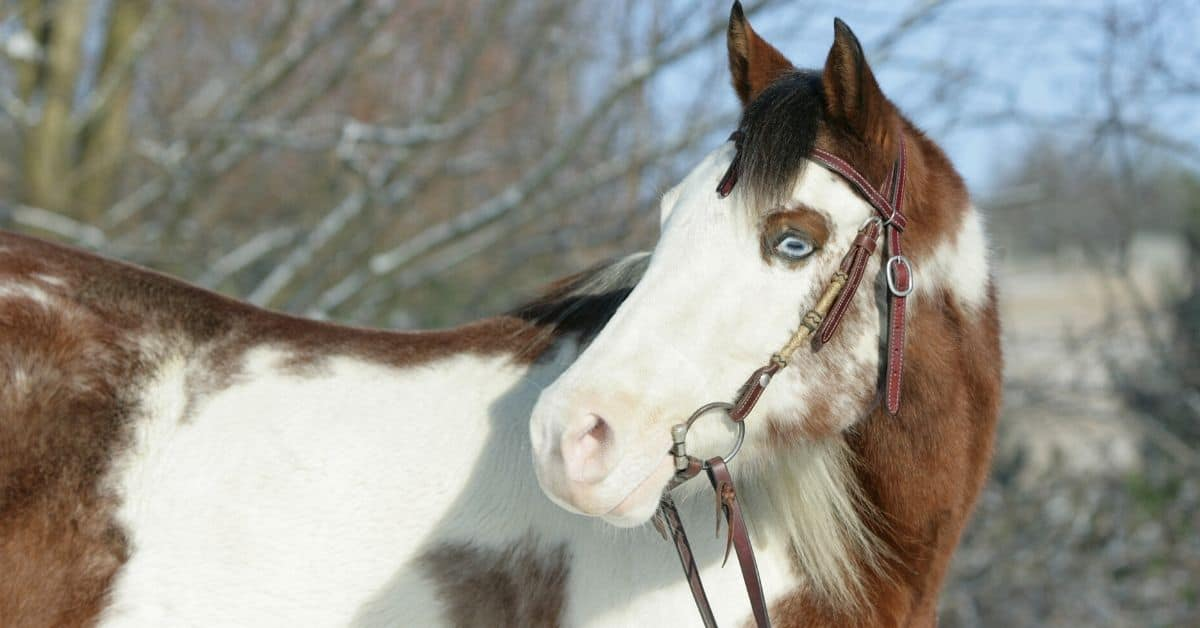 15 Of Our Favorite Pictures Of Paint Horses