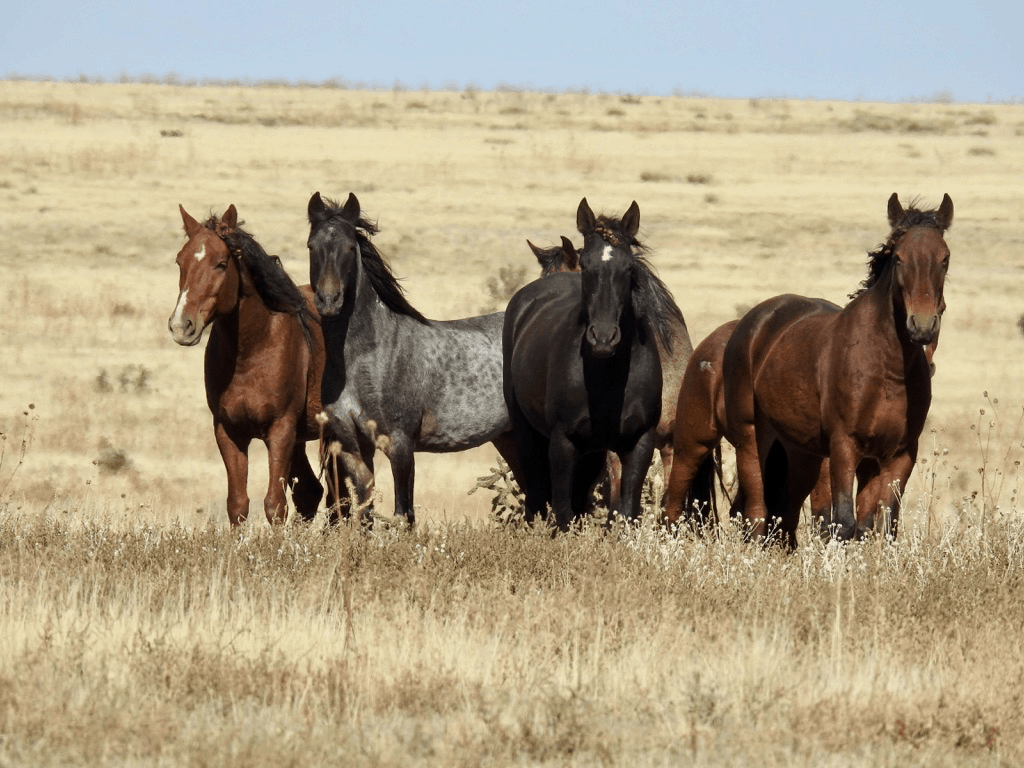 143 Wild Horses Run Free At This Colorado Mustang Sanctuary