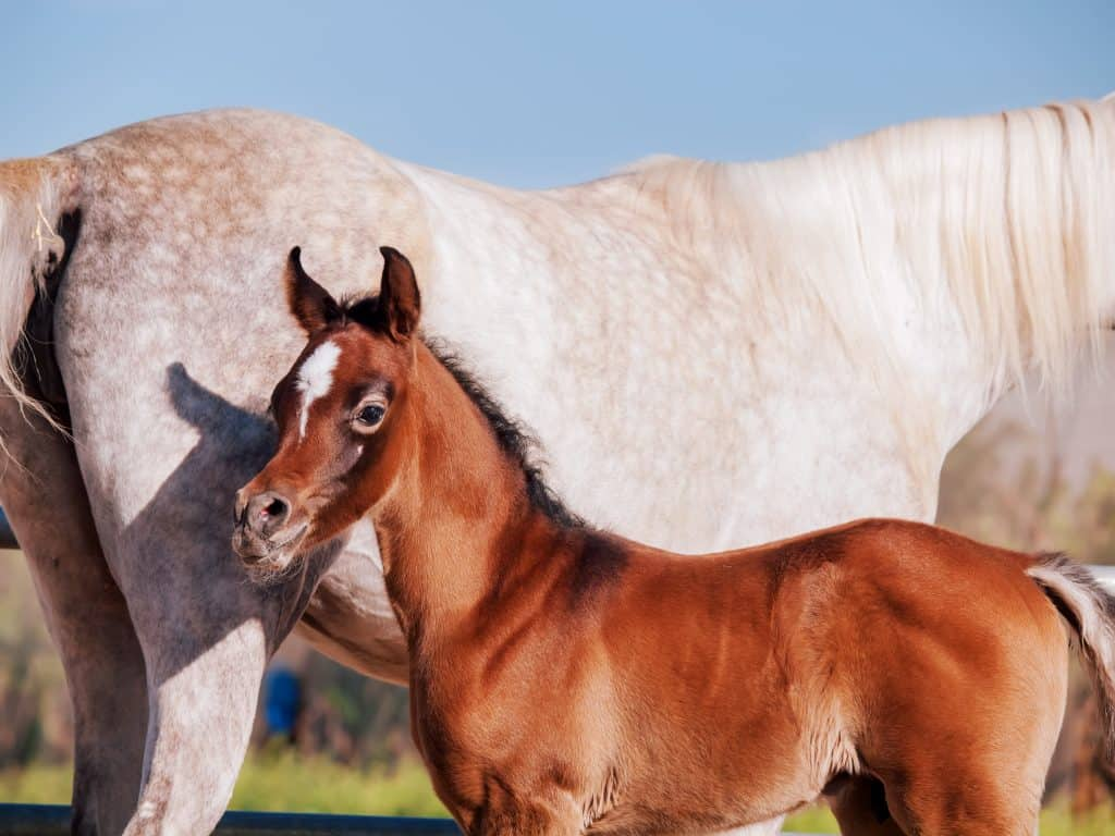 The Seven Most Beautiful Horse Breeds In The World