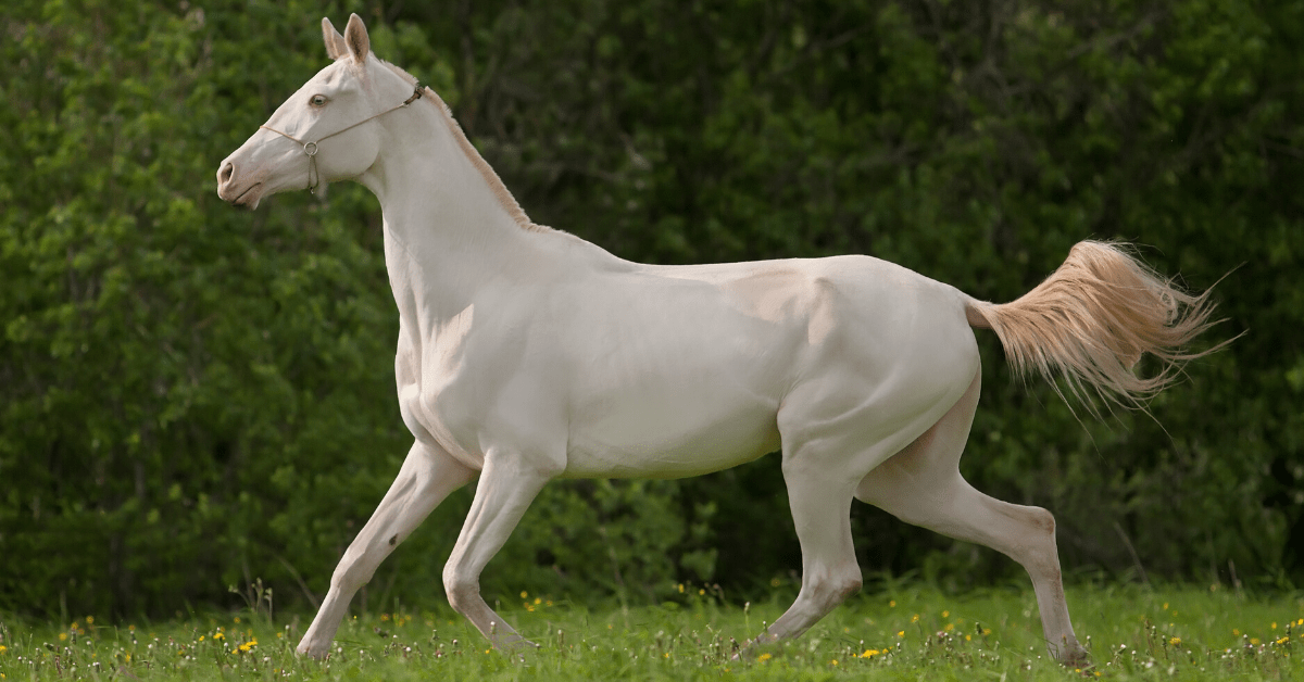 5 Of The Most Expensive Horse Breeds In The World
