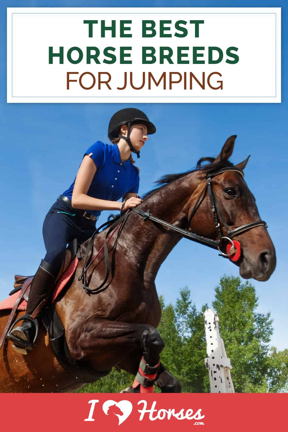The Best Horse Breeds For Jumping